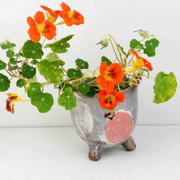Conglomerate Series - Planter in Pink