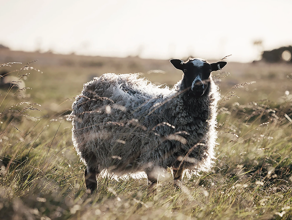 Gotland sheep wool By Mölle plaids and blankets