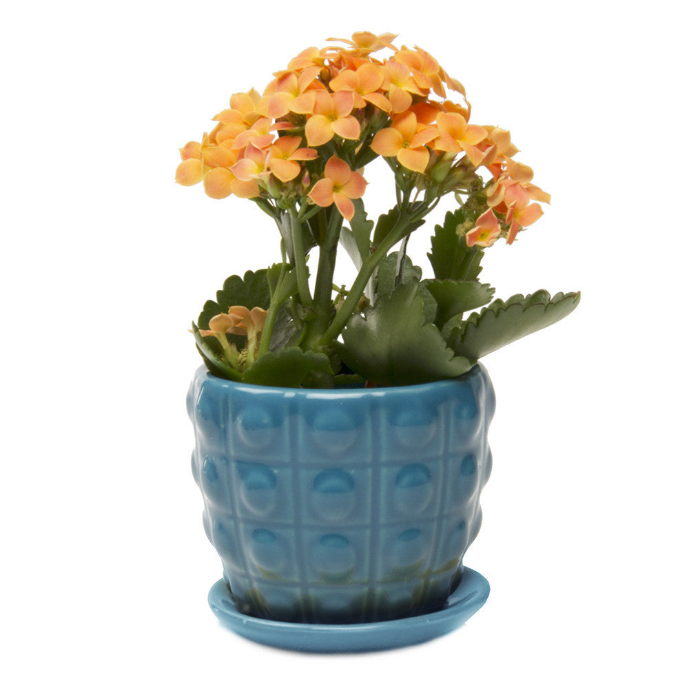Convex Plant Pot and Saucer - Blue