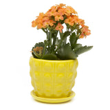 Convex Plant Pot and Saucer - Yellow
