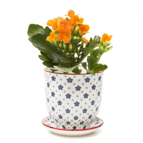 liberte red daisy pot and saucer