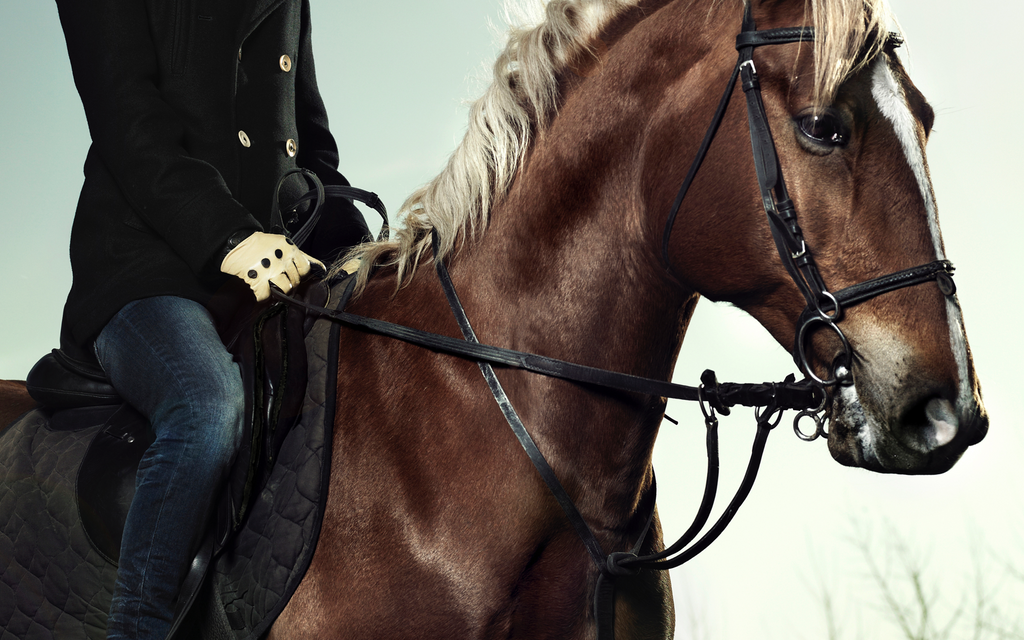 All about English Bridle