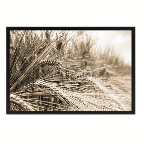 Nutritious Nature Barley Paddy Field Sepia Landscape decor, National Park, Sightseeing, Attractions, Black Frame