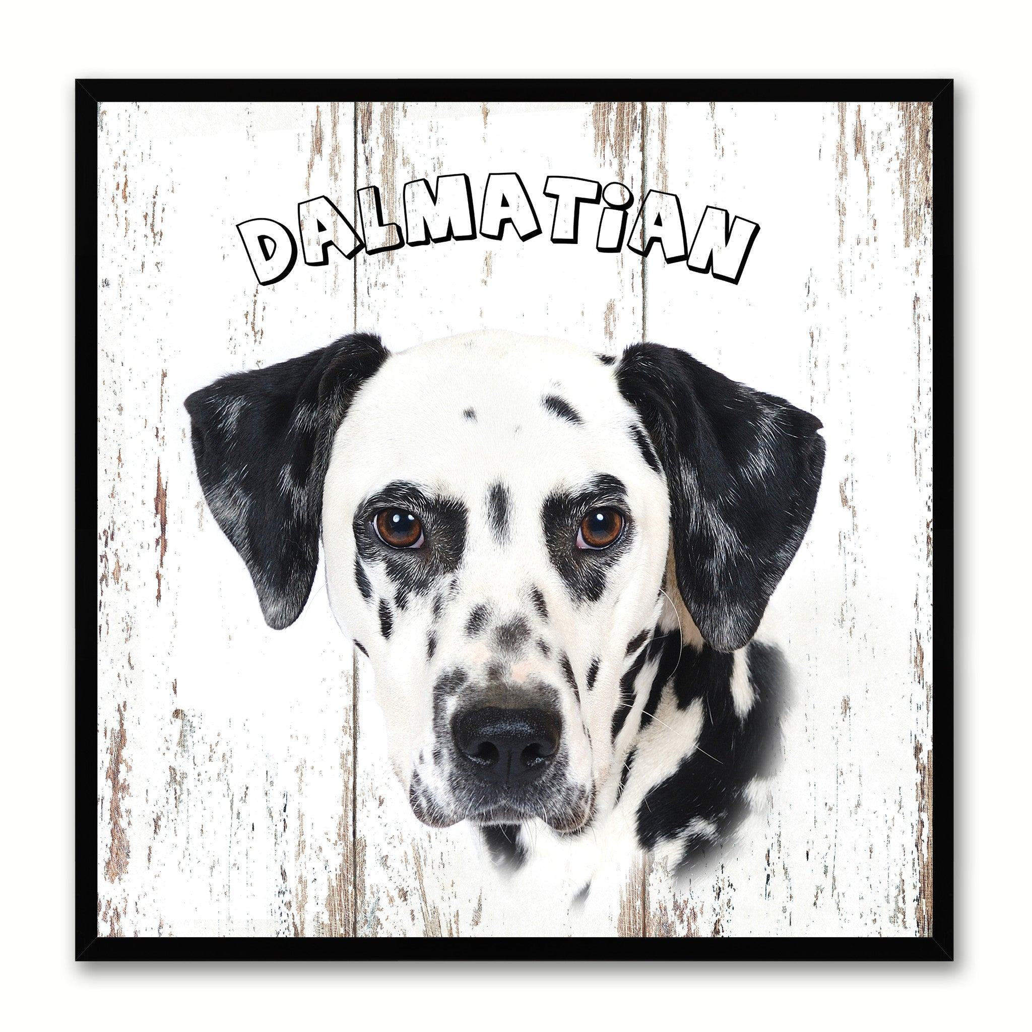 Dalmatian Dog Canvas Print Picture Frame Gift Home Decor Wall Art Decoration