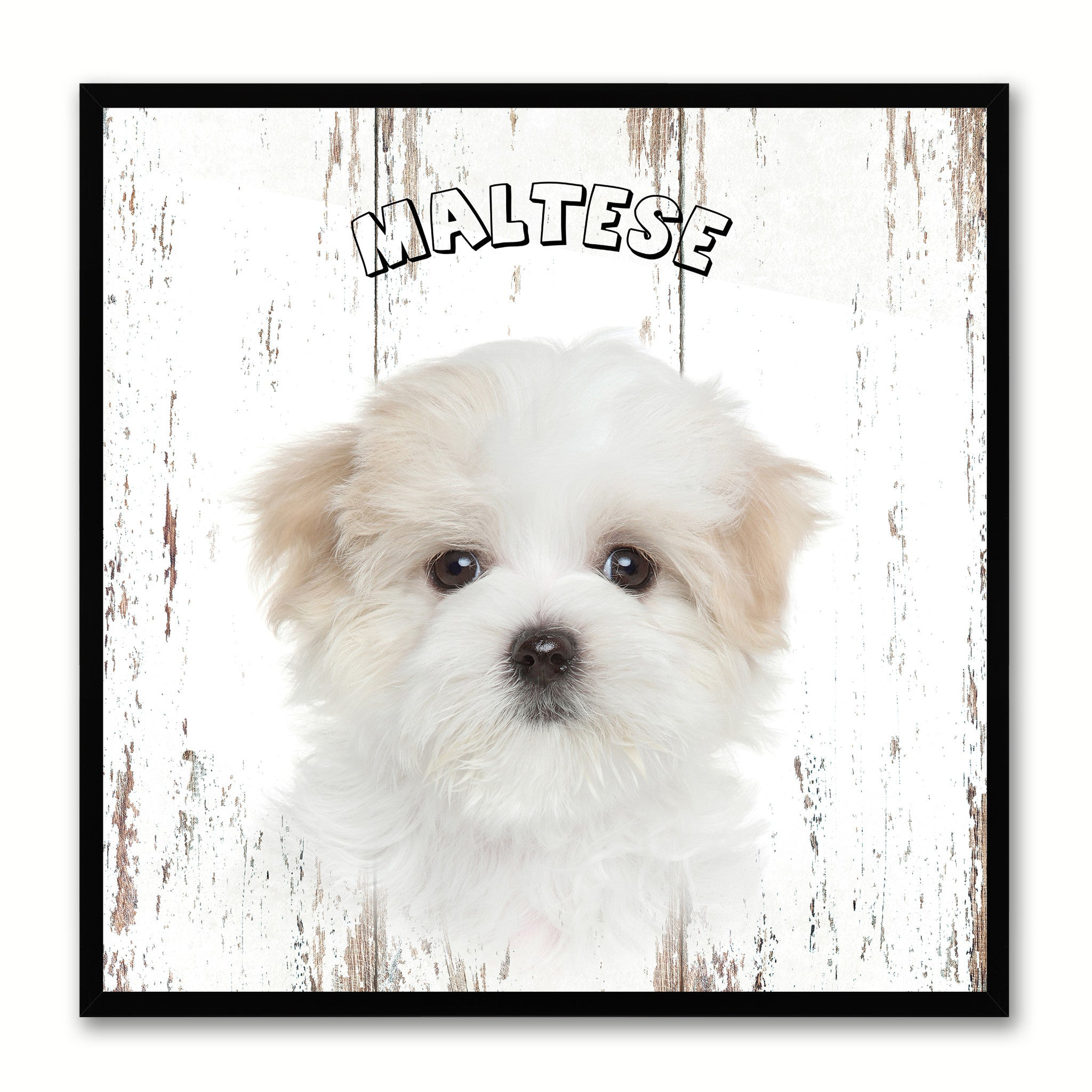 Maltese Dog Canvas Print Picture Frame Gift Home Decor Wall Art Decoration