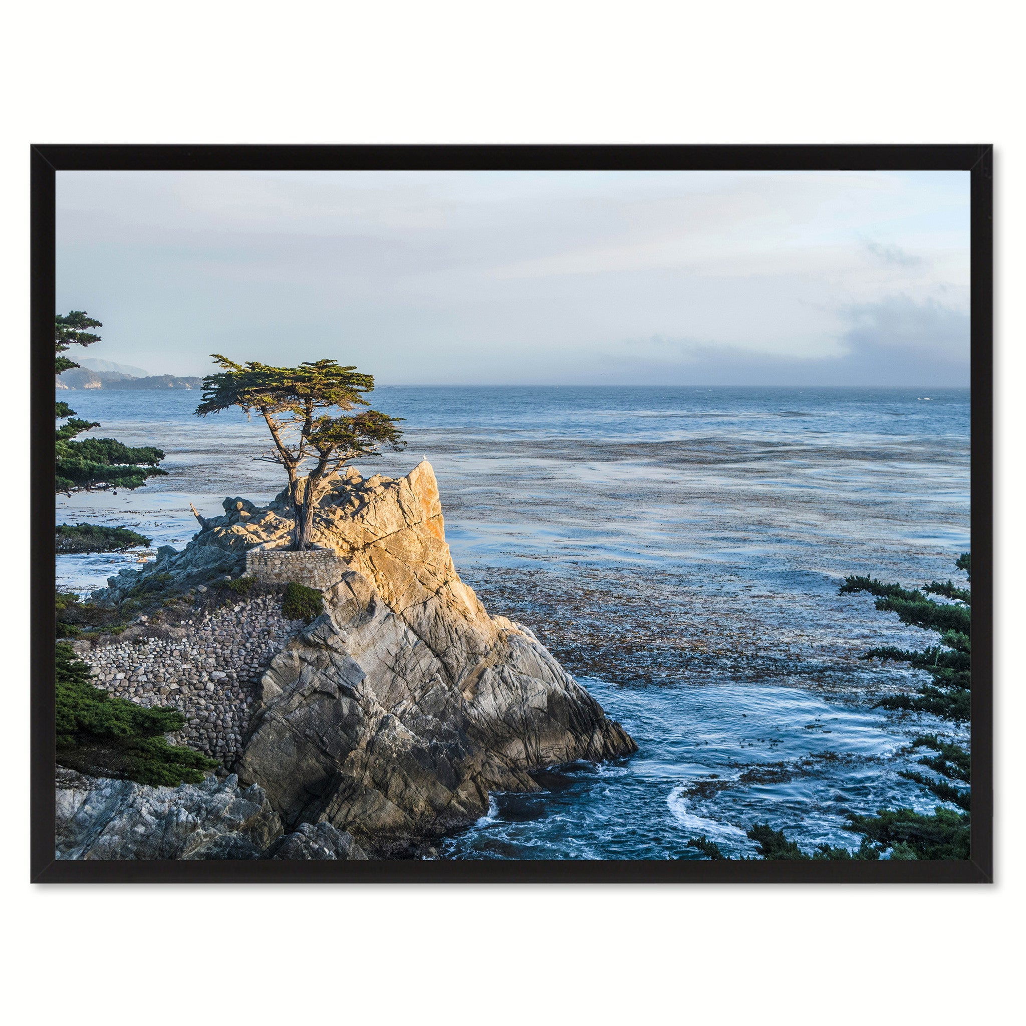 Monterey Cypress Tree Landscape Photo Canvas Print Pictures Frames Home Décor Wall Art Gifts