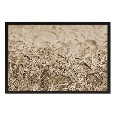 Golden rye paddy ready for harvest Sepia Landscape decor, National Park, Sightseeing, Attractions, Black Frame