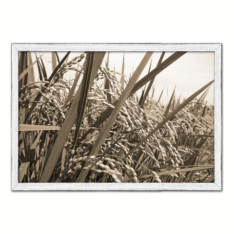 Nutritious Nature Rice Paddy Field Sepia Landscape decor, National Park, Sightseeing, Attractions, White Wash Wood Frame