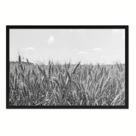 Wheat ears paddy full of grain, on the field Black and White Landscape decor, National Park, Sightseeing, Attractions, Black Frame