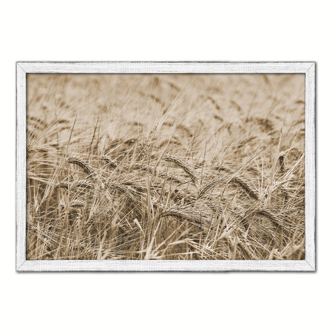 Golden rye paddy ready for harvest Sepia Landscape decor, National Park, Sightseeing, Attractions, White Wash Wood Frame