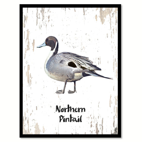 Northern Pintail Bird Canvas Print, Black Picture Frame Gift Ideas Home Decor Wall Art Decoration