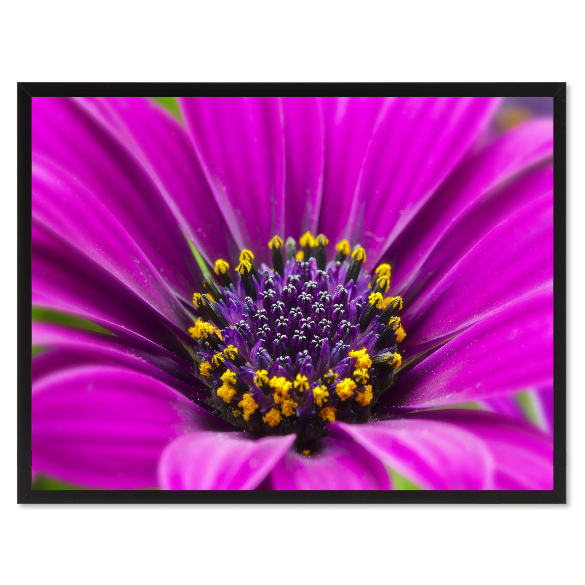 Purple Gazania Flower Framed Canvas Print Home Décor Wall Art