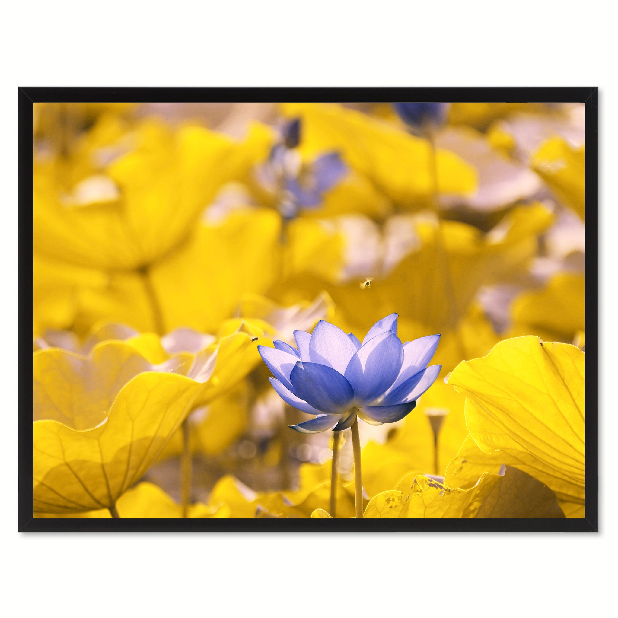 Yellow Lotus Flower Framed Canvas Print Home Décor Wall Art