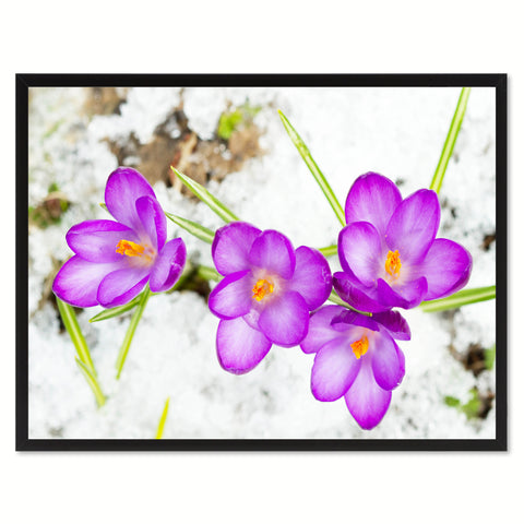 Purple Crocuses Flower Framed Canvas Print Home Décor Wall Art