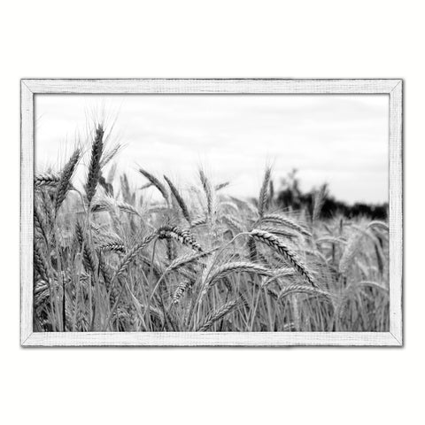 Nutritious Nature Grain Paddy Field Black and White Landscape decor, National Park, Sightseeing, Attractions, White Wash Wood Frame