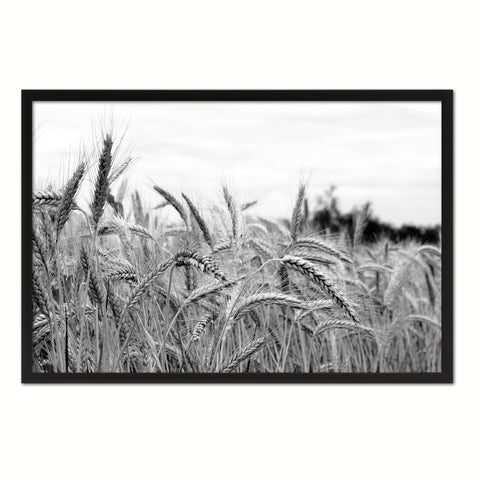Nutritious Nature Grain Paddy Field Black and White Landscape decor, National Park, Sightseeing, Attractions, Black Frame