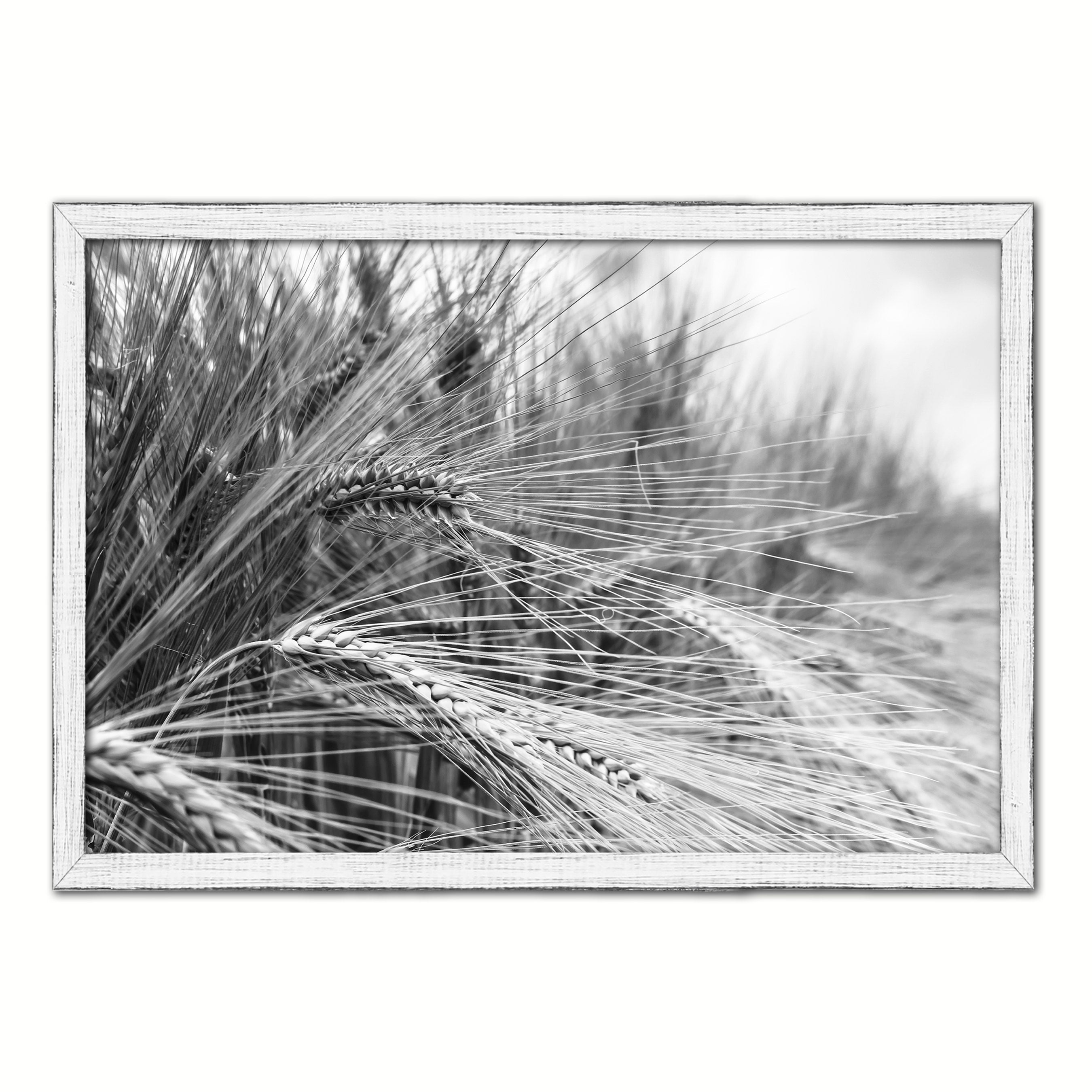 Nutritious Nature Barley Paddy Field Black and White Landscape decor, National Park, Sightseeing, Attractions, White Wash Wood Frame