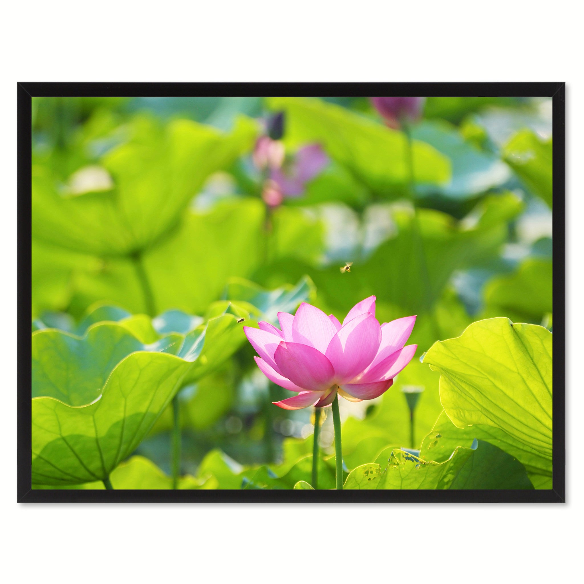 Pink Lotus Flower Wall Art Home Décor Frame Spotcolorart