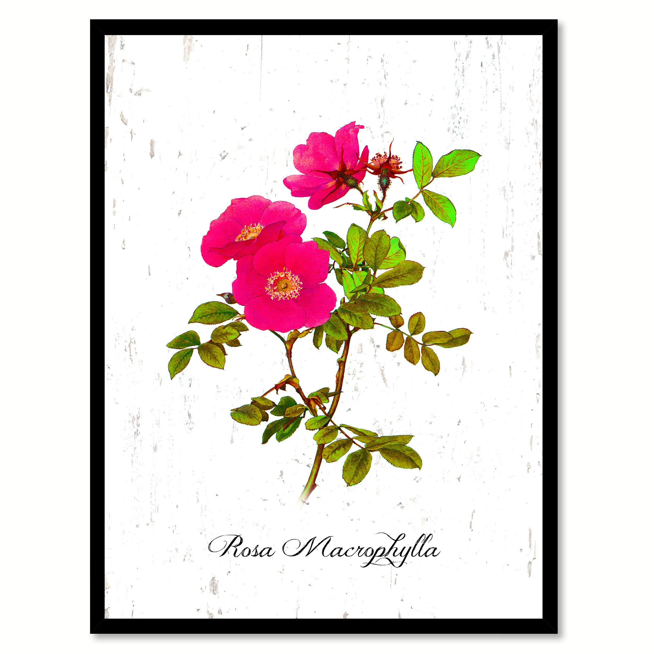 Pink Rose Flower Framed Canvas Print Floral Home Decor Wall Art ...