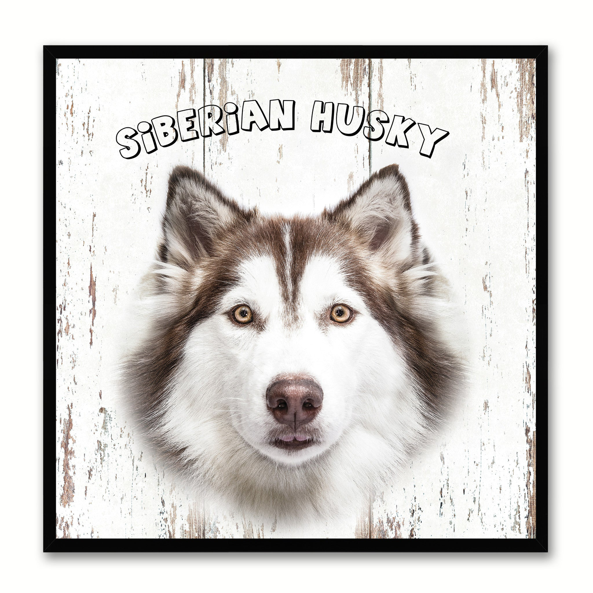 Siberian Husky Dog Canvas Print Picture Frame Gift Home Decor Wall Art  Decoration