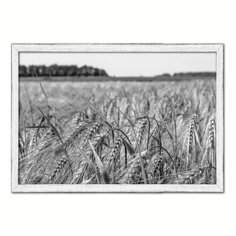 Barley paddy Black and White Landscape decor, National Park, Sightseeing, Attractions, White Wash Wood Frame
