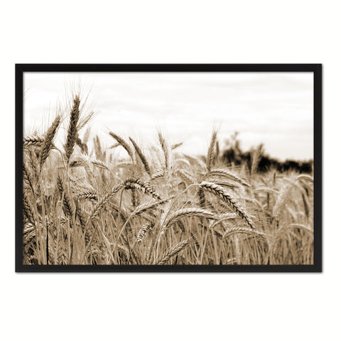 Nutritious Nature Grain Paddy Field Sepia Landscape decor, National Park, Sightseeing, Attractions, Black Frame