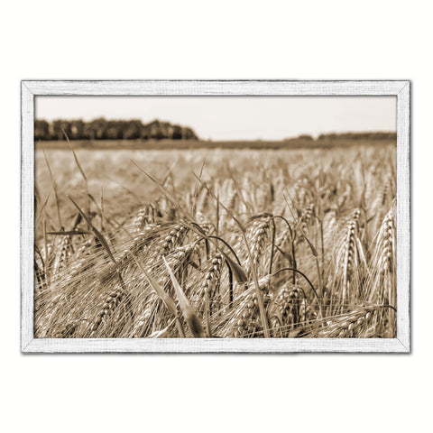 Golden rye paddy ready for harvest Black and White Landscape decor, National Park, Sightseeing, Attractions, White Wash Wood Frame