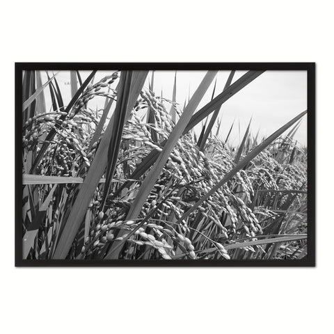 Nutritious Nature Rice Paddy Field Black and White Landscape decor, National Park, Sightseeing, Attractions, Black Frame