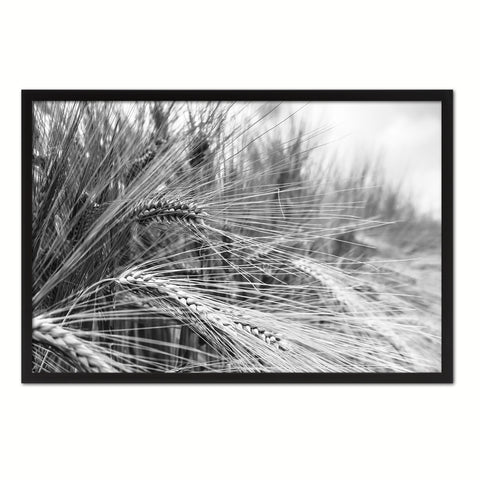 Nutritious Nature Barley Paddy Field Black and White Landscape decor, National Park, Sightseeing, Attractions, Black Frame