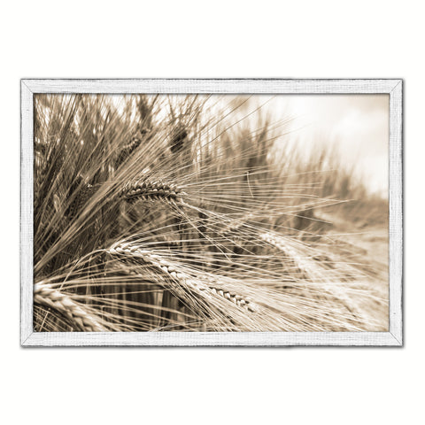 Nutritious Nature Barley Paddy Field Sepia Landscape decor, National Park, Sightseeing, Attractions, White Wash Wood Frame