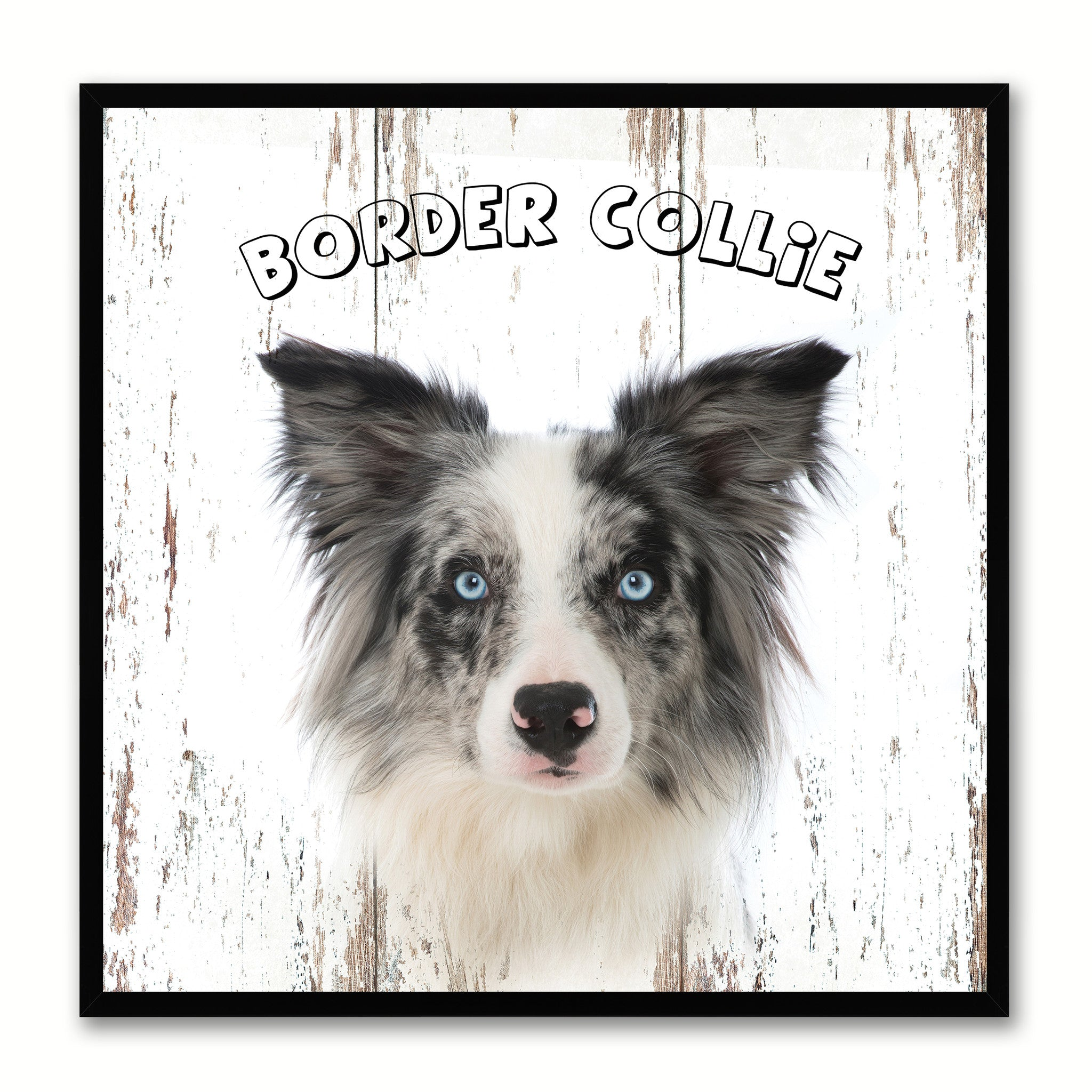 Border Collie Dog Wall Art Home Decor Frames fice Decoration