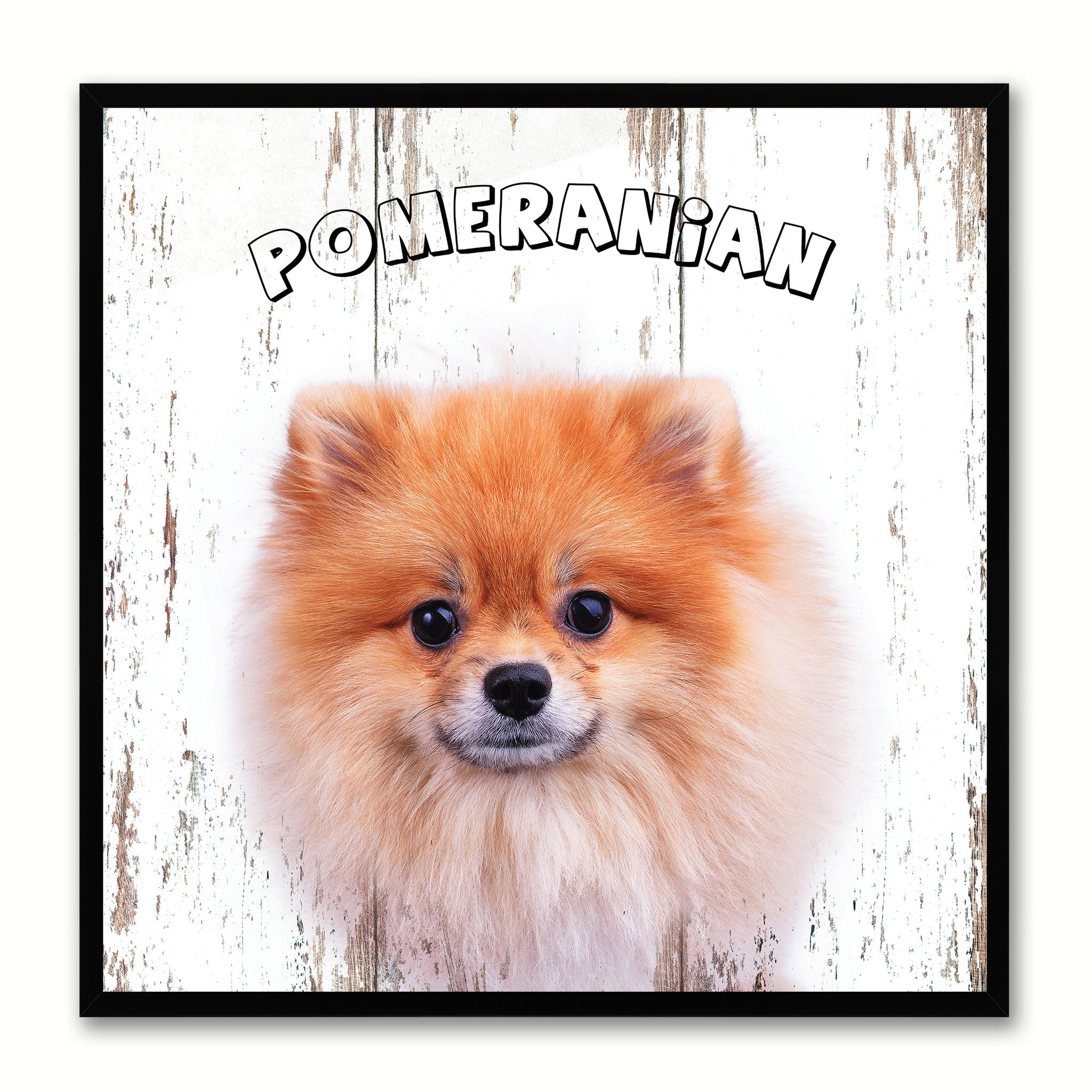 Pomeranian Dog Canvas Print Picture Frame Gift Home Decor Wall Art Decoration