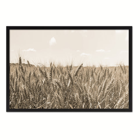 Wheat ears paddy full of grain, on the field Sepia Landscape decor, National Park, Sightseeing, Attractions, White Wash Wood Frame