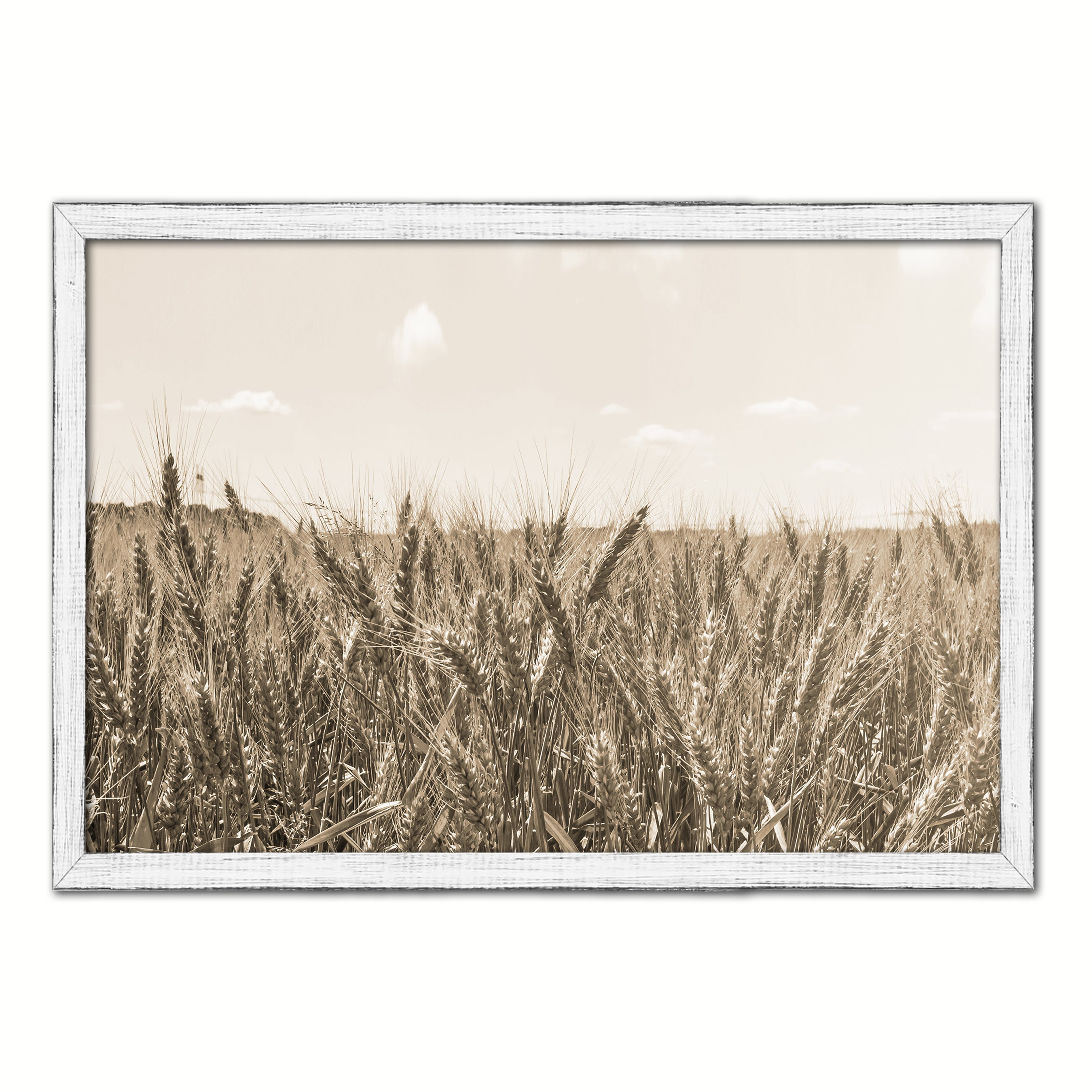 Wheat ears paddy full of grain, on the field Sepia Landscape decor, National Park, Sightseeing, Attractions, Black Frame