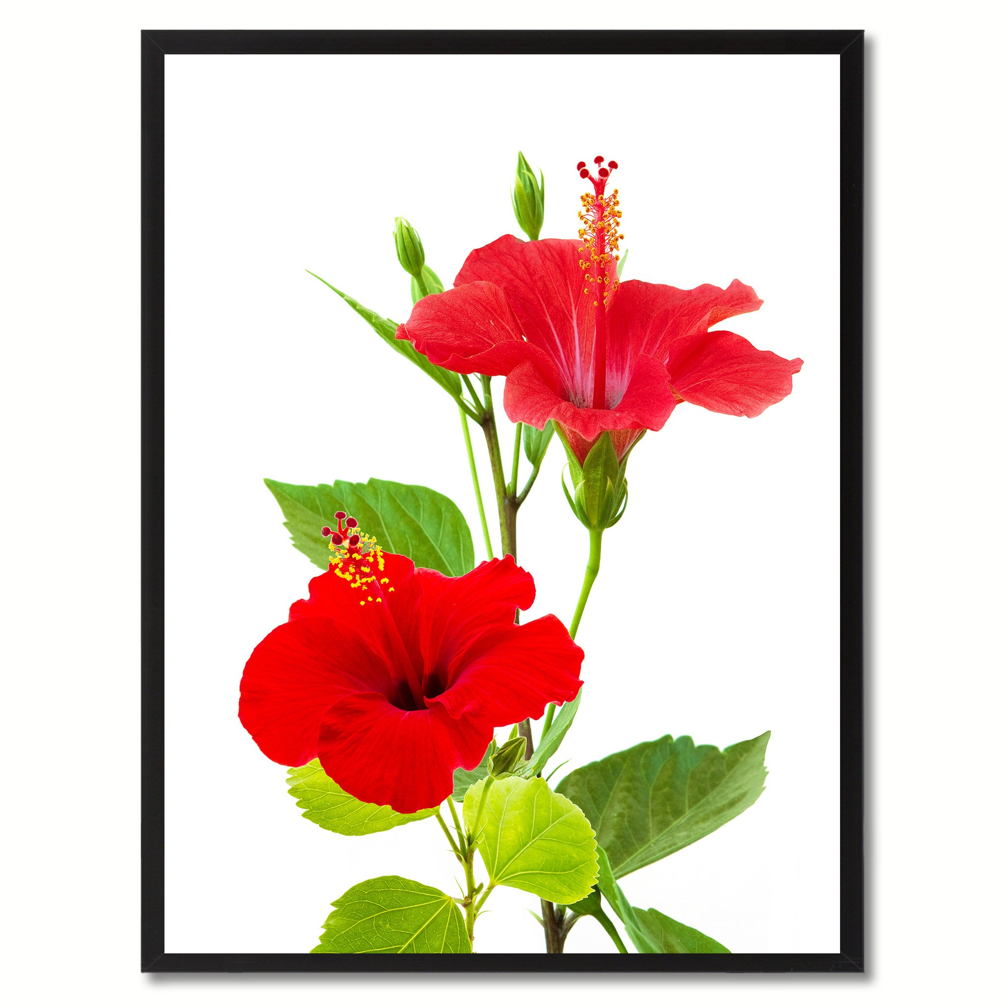 Red Hibiscus Flower Wall Art Home Décor Frame Spotcolorart