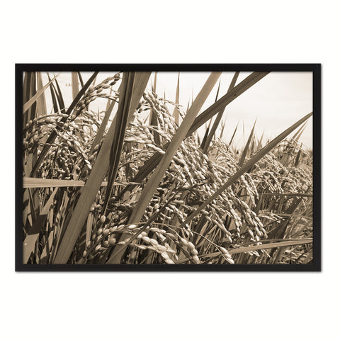 Nutritious Nature Rice Paddy Field Sepia Landscape decor, National Park, Sightseeing, Attractions, Black Frame
