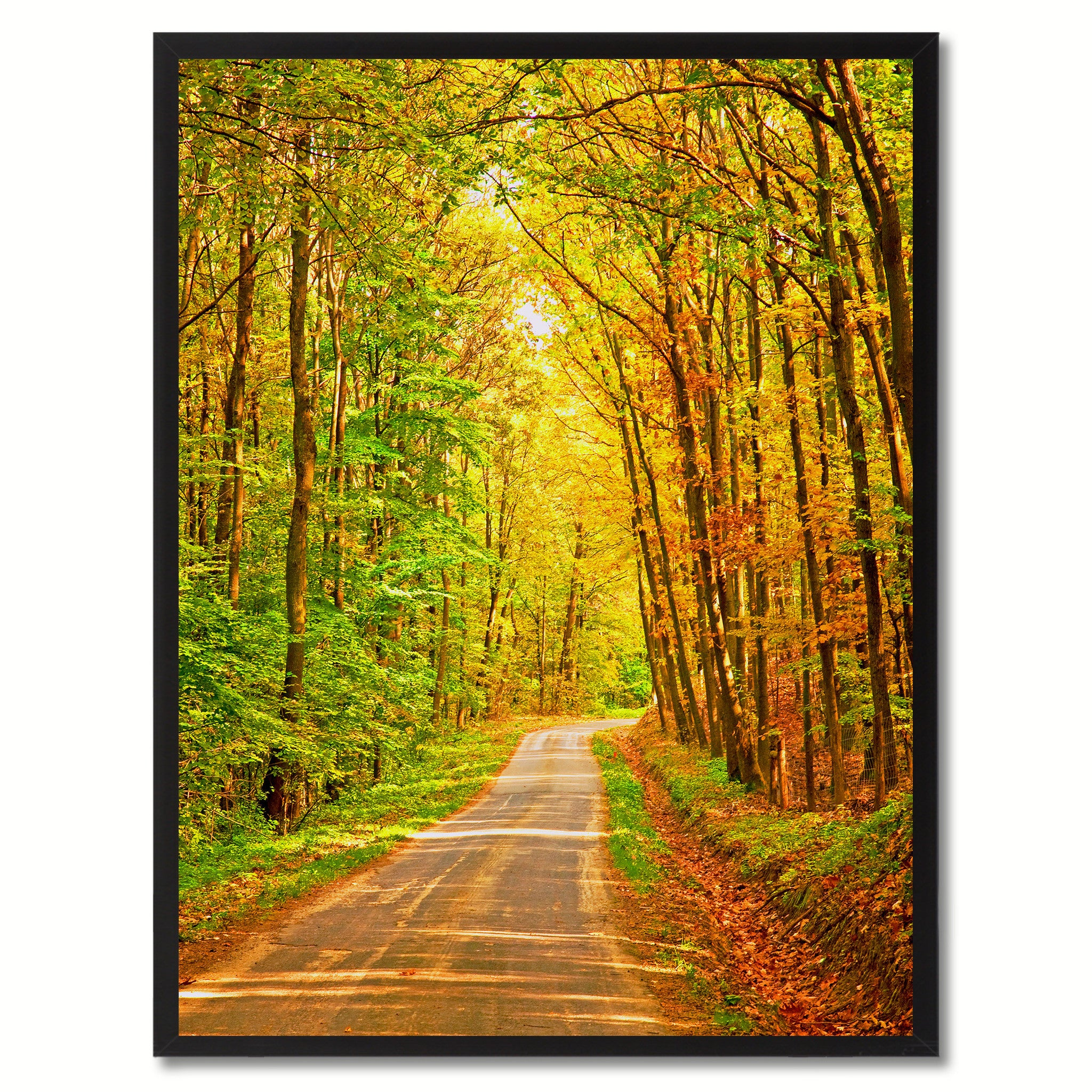 Forest Wood Landscape Photo Canvas Print Pictures Frames Home Décor Wall Art Gifts