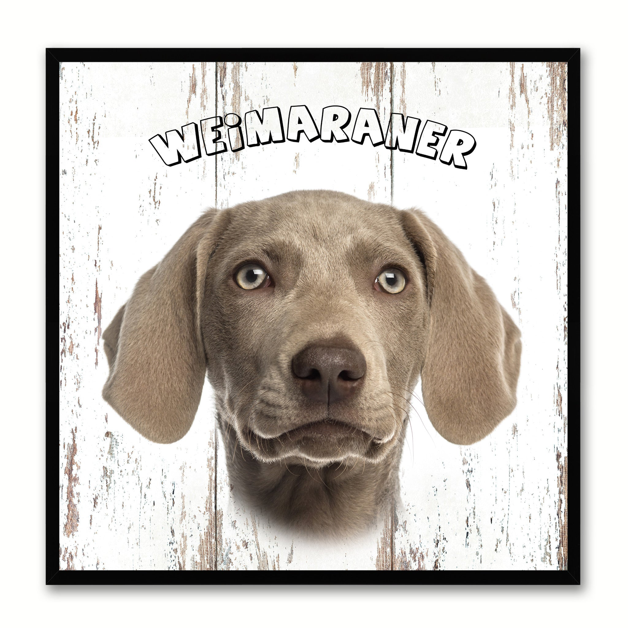 Weimaraner Dog Canvas Print Picture Frame Gift Home Decor Wall Art Decoration