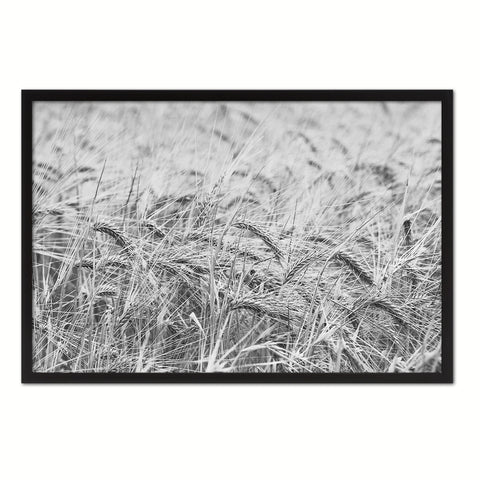 Golden rye paddy ready for harvest Black and White Landscape decor, National Park, Sightseeing, Attractions, Black Frame