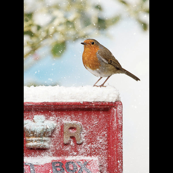 Robin on a Post Box