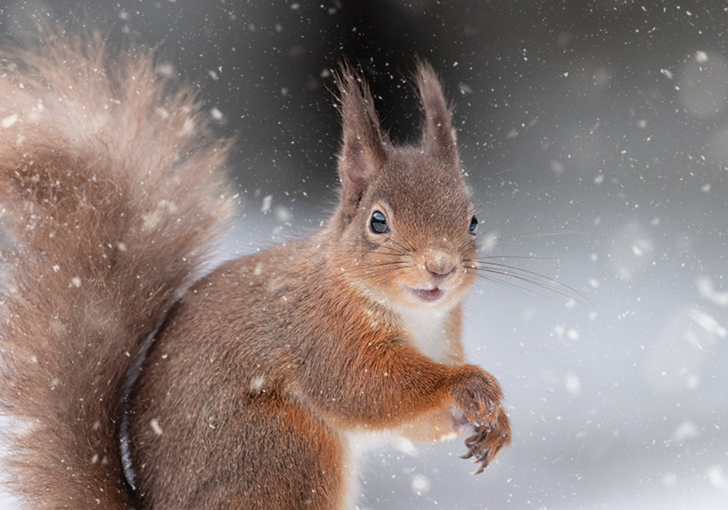 Cheerful Squirrel