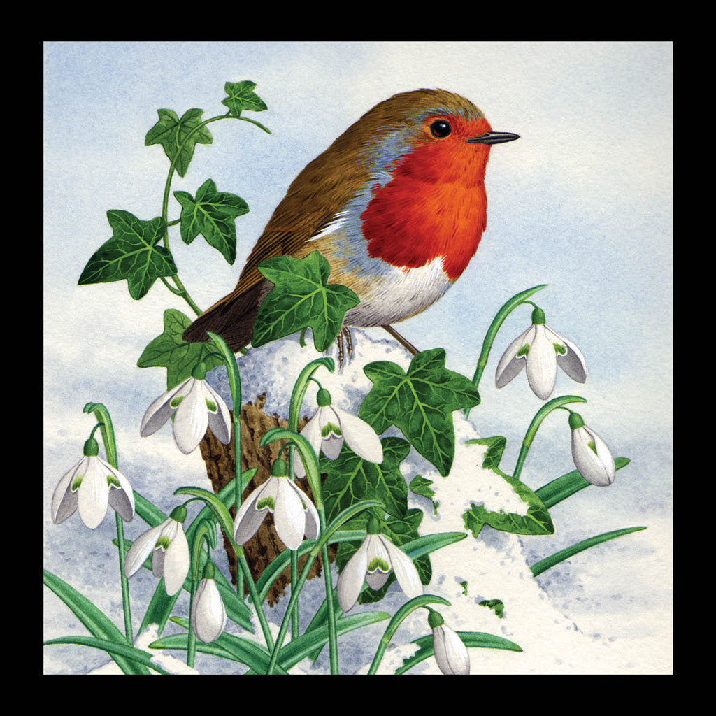 Robin amongst the Snowdrops