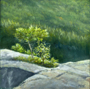 """Cliffside Perch"" is an 8 by 8 inch oil on panel painting by Rebecca M. Fullerton, depicting a hardy little spruce tree and other plants growing the cracks of a rocky overlook, with a green, forested hillside in the background."