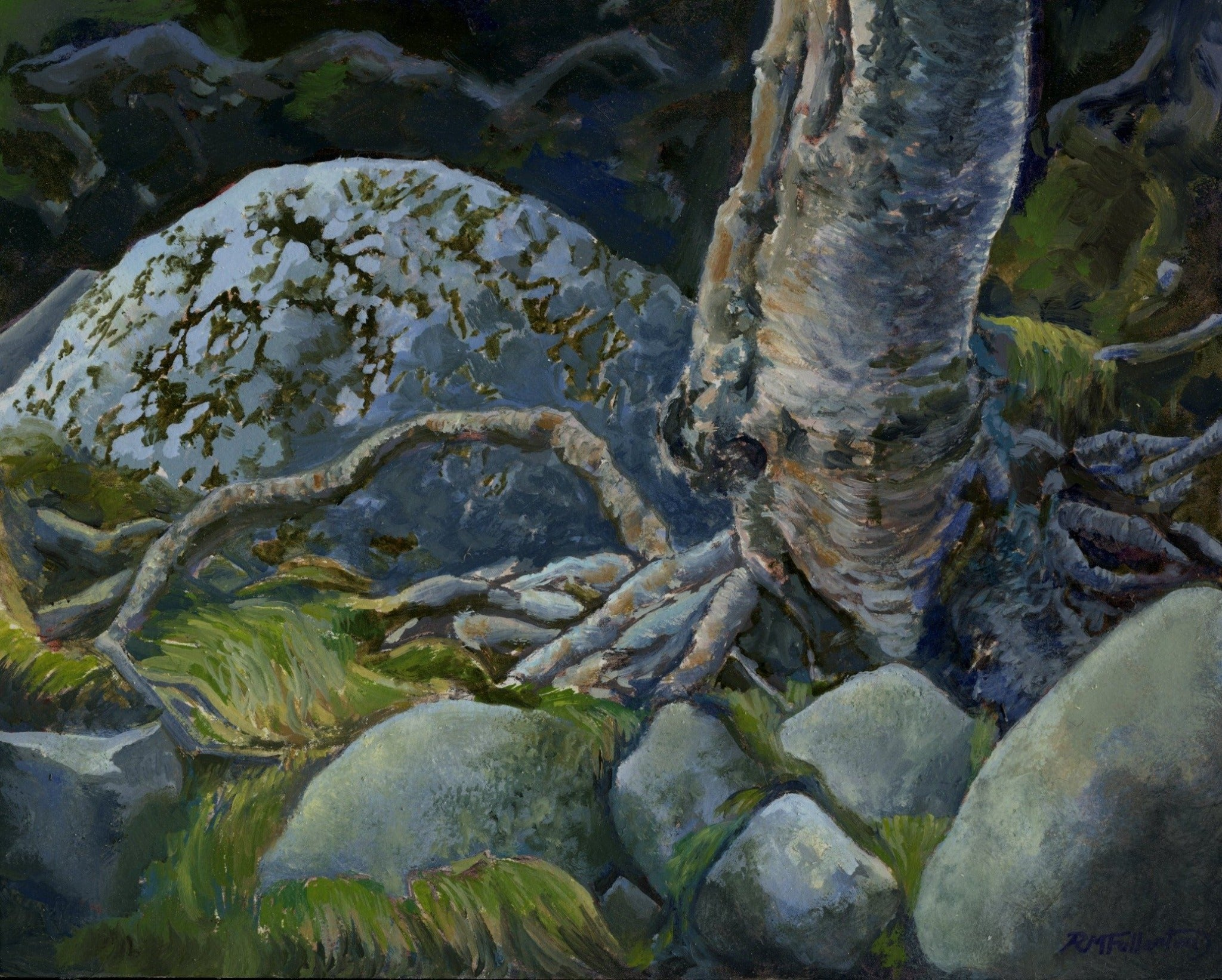 """Roots and Rocks"" is an 8 by 10 inch oil painting on panel by Rebecca M. Fullerton, depicting gray, granite rocks, green grasses and moss, and the twisting roots of a silver birch."