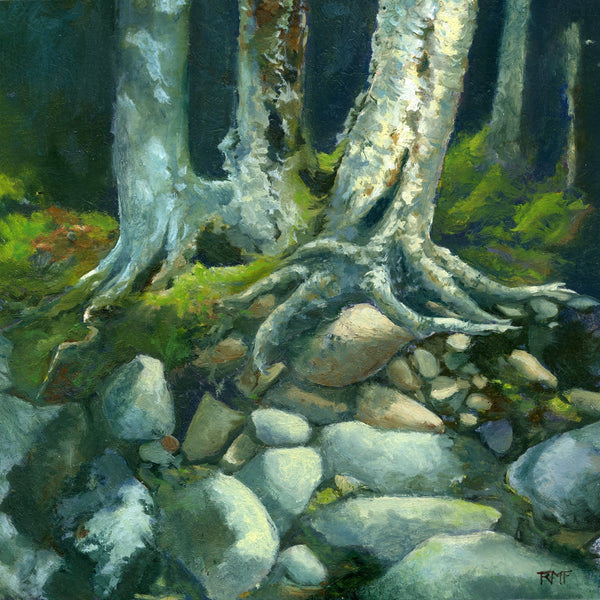 """Riverbank Boulders"" is a 10 by 10 inch oil painting on panel by Rebecca M. Fullerton, depicting riverbank rocks and the roots of birch and hardwood trees climbing down over them. Sunlight strikes green mosses at the base of the trees, and the rocks in sunlight are many shades of gray, beige and ochre."