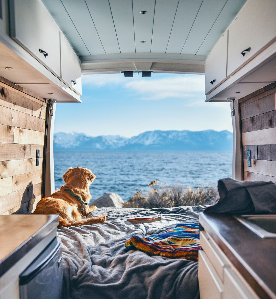 Sydney Ferbrache's dog looking out the back of her van, living full-time