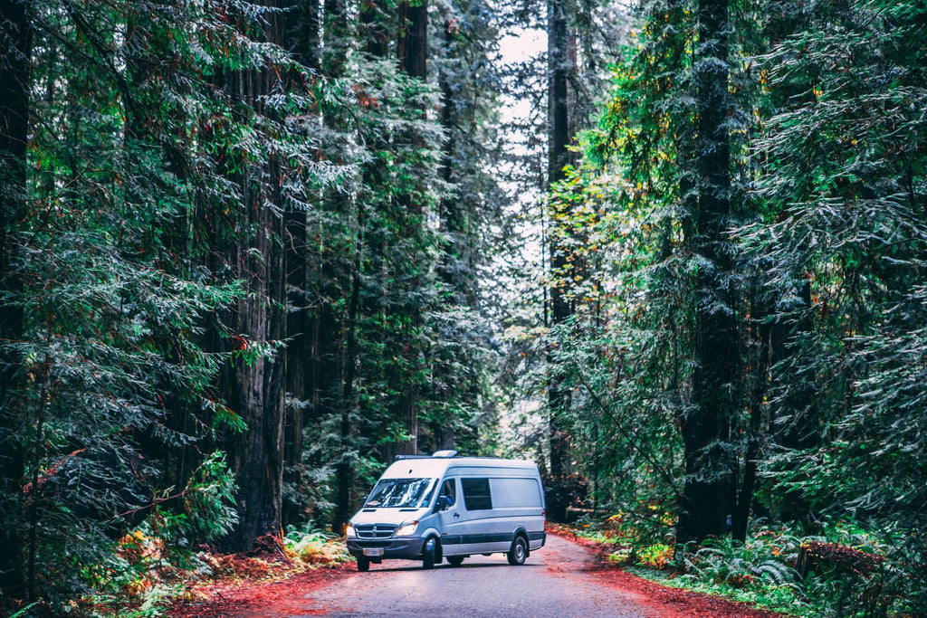 Vanlife in the forrest