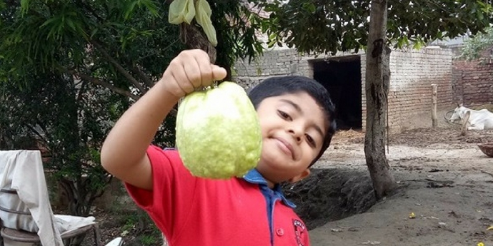 Buy Guava from Farmers