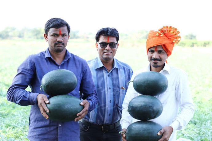 Buy watermelons from farmers in bulk