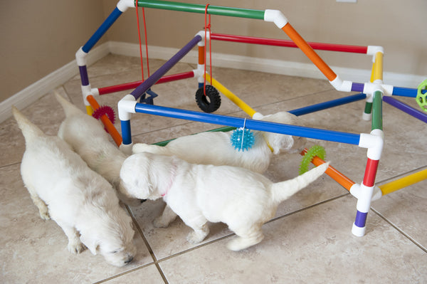 PVC Puppy Gym - DIY